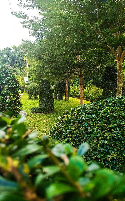 Camella Riverfront garden