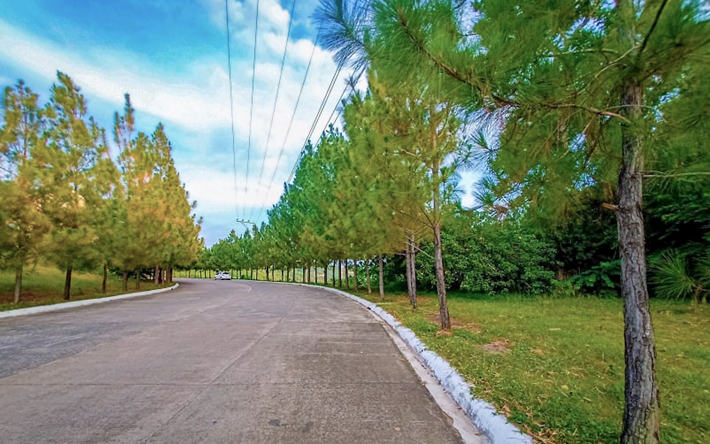 Camella Riverfront Green Avenue, a tree-lined roadway